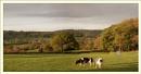 Views from Pashley Green Farm