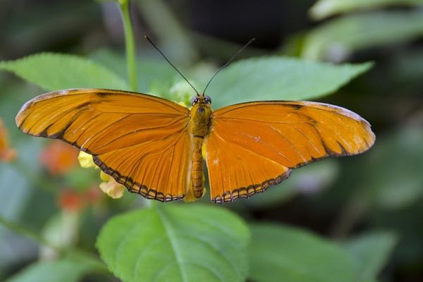 Orange Julia by williamthorpe271