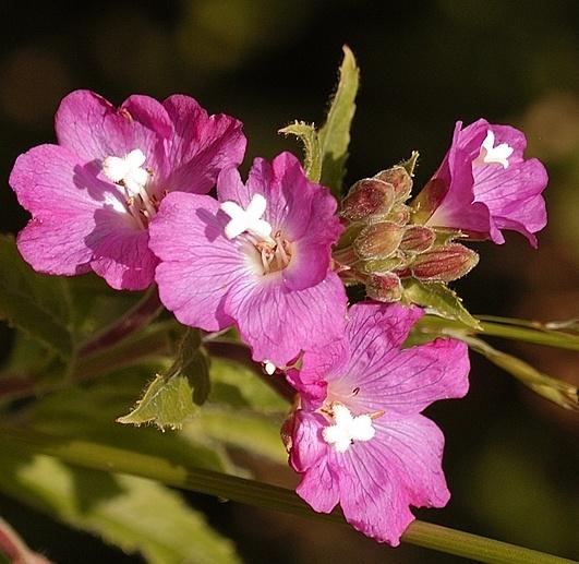 More flowers by rhol2