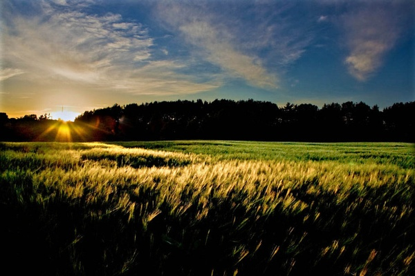 Sunset On The Barley by TTCIMAGES