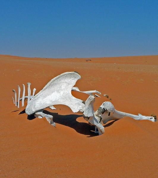 Victim of the desert (KSA) by trevsmith00