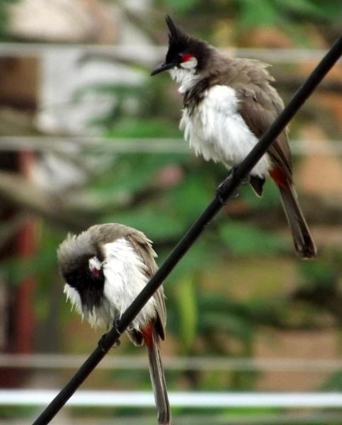 Birds outside my window by santosh275