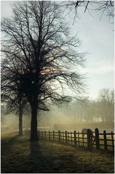 Dappled sunlight by bfgstew