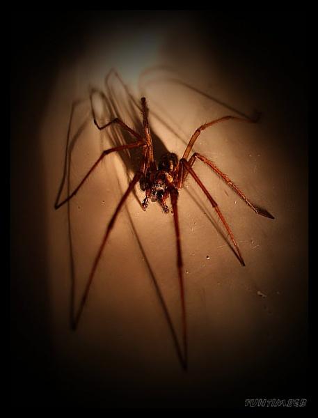 Arachnophbia by funtimegb