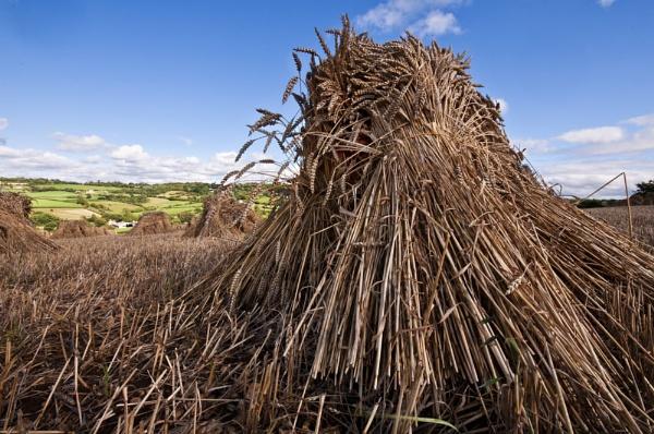 Hay Stook by Wallybazoom
