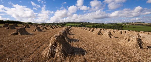 Hay Stooks 2 by Wallybazoom