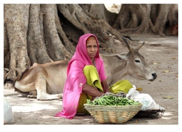 Vegetable Vendor 1 by kishanm14