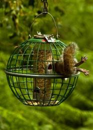 Squirrel proof??