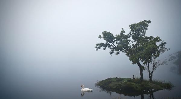 Swan Lake by JulieLetten