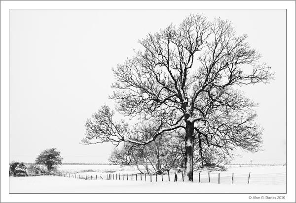In the bleak midwinter by Tynnwrlluniau