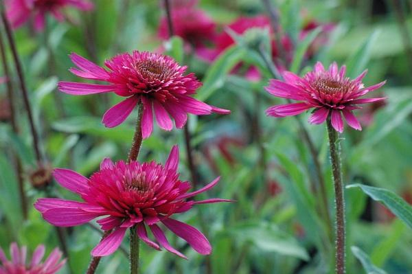 purpleflowers by love_photo