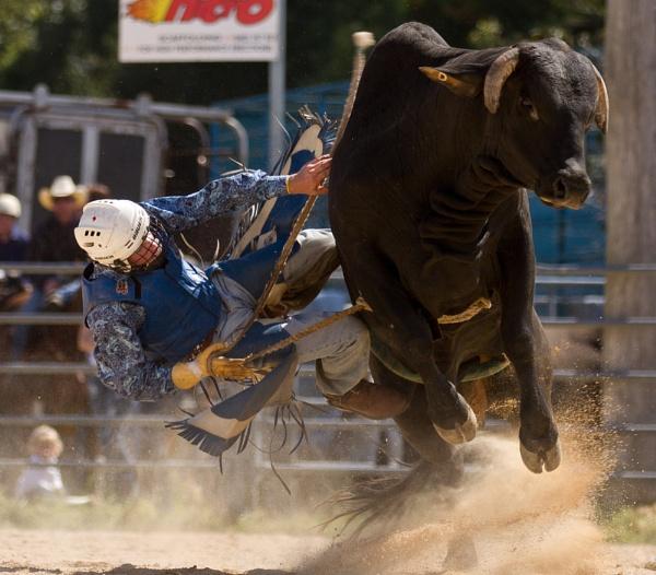 Bull Rider by steve_evans