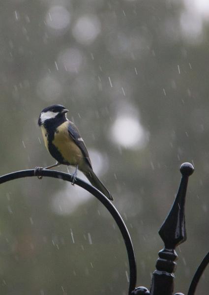 Rainy day at the feeding station by ambercat
