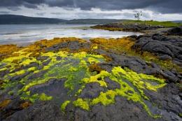 Loch Scridain Mull