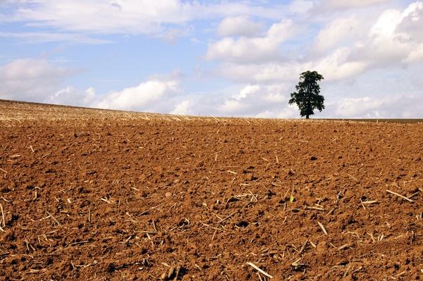 Lone Tree by Amrok