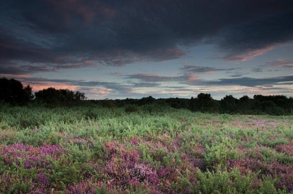 Norfolk Heathland by PaulThetfordPhotography
