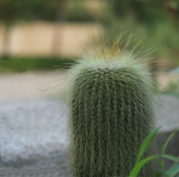 Fuzzy Cactus! by Foxaline