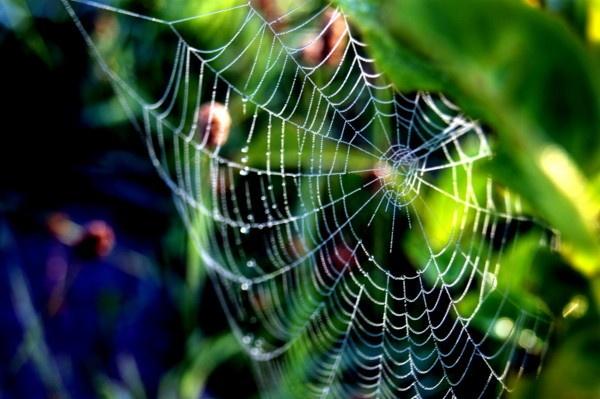 hidden web by ast333