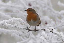 winters photo
