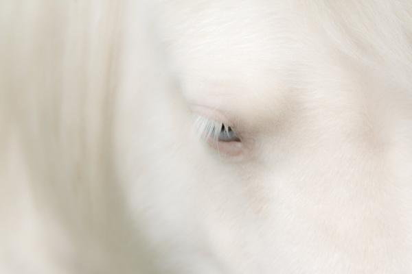 Shetland pony by Kate11171