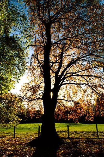 Autumn Morning by Biz