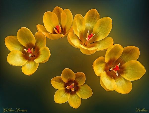 Yellow Dream by Delbon