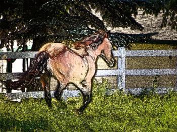 Horse Impressed