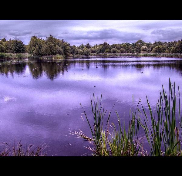 Westwood Blue by Rob66