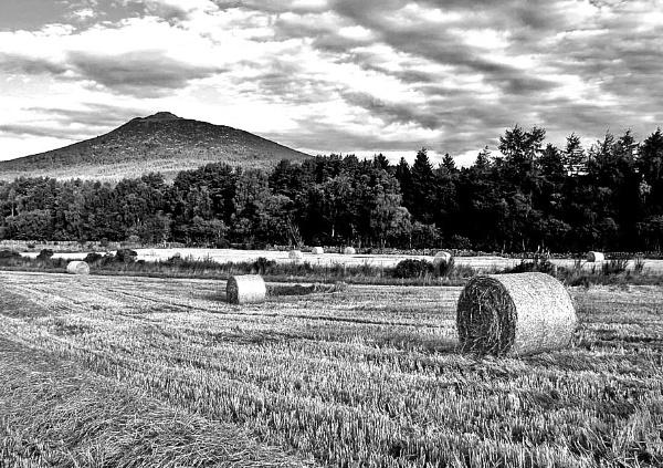 Round bales & Bennachie. by kdm1