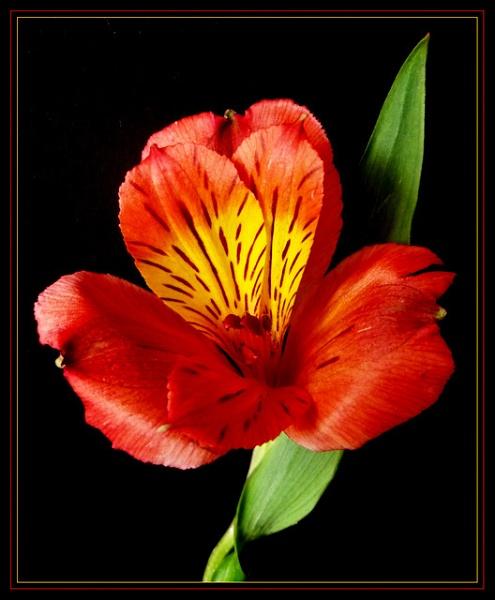 \'Burnt Orange\' by Peagreen