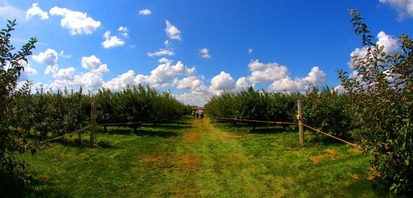 Apple picking on a beautiful Sunday by ShotfromaCanon
