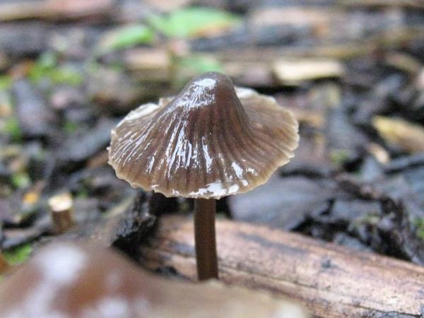 fungi by min