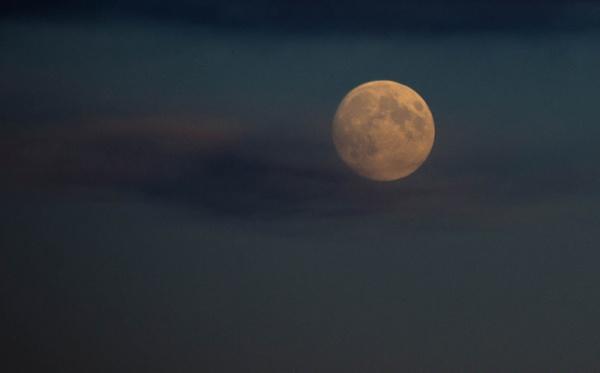 harvest moon by inntrykk