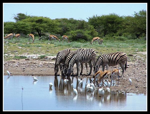 Etosha National Park Namibia by Elsabe