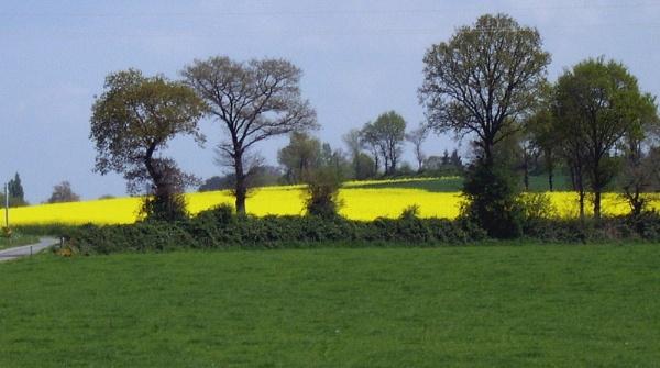 across the  Rapeseed fields by ast333