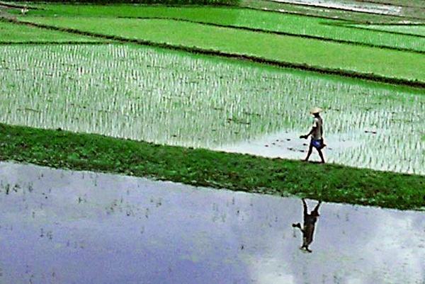 Farmer at the field