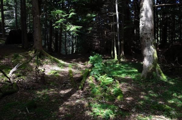 Arboretum Walk by Rab90