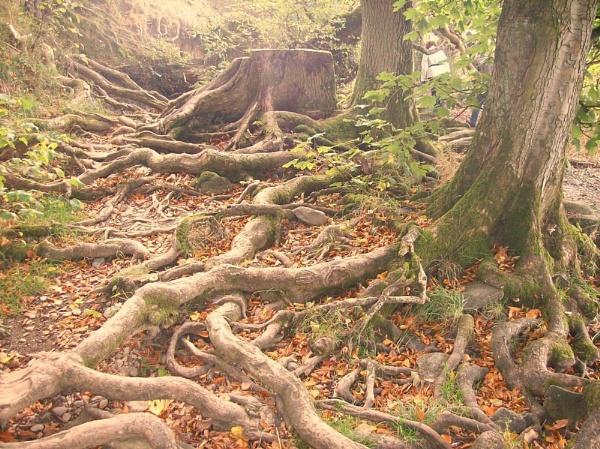 Tree Roots <3 by AmyLaurenBuchanan