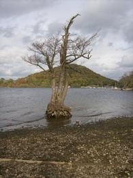 Random tree ;)
