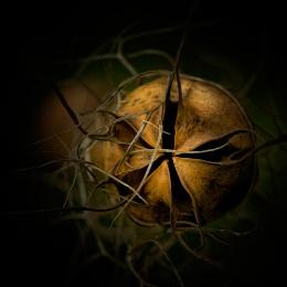 Golden Cask 2