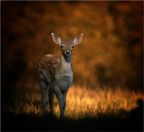 Deer by clintnewsham