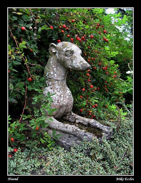 Hound by oldgreyheron