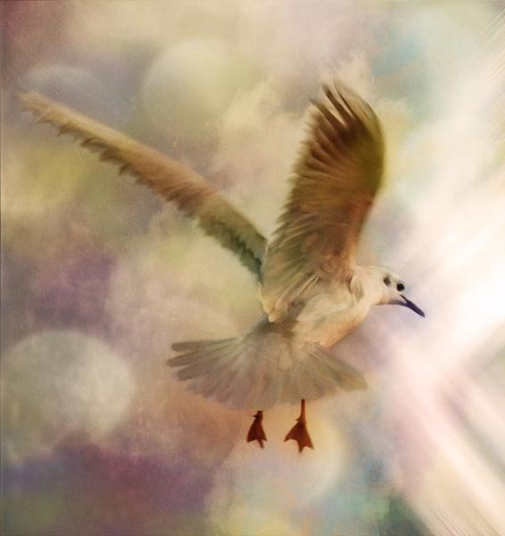 Seeking Light by Suehh