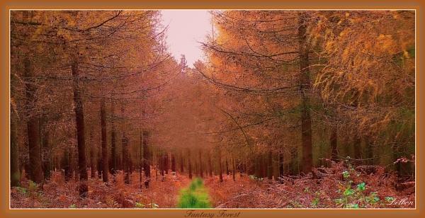 Fantasy Forest by Delbon