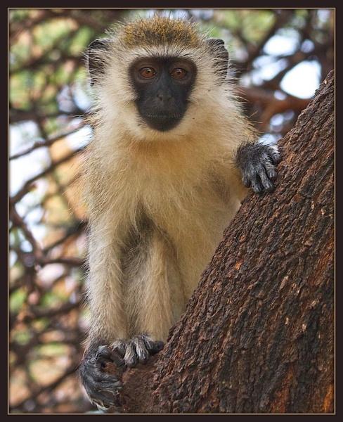 Monkey by mjparmy