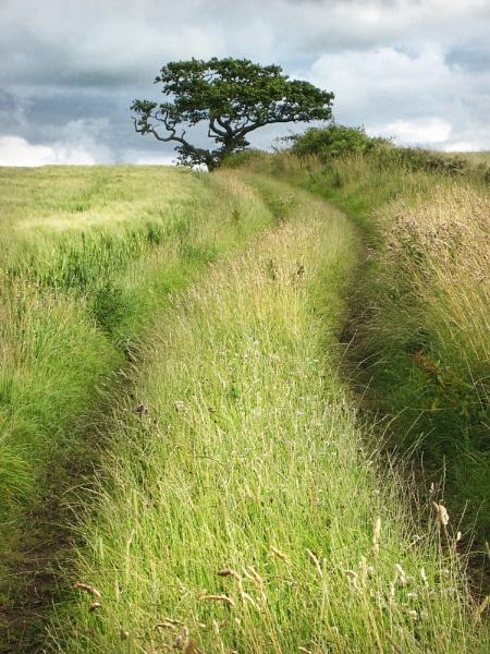 A simple landscape by YorkshireSam