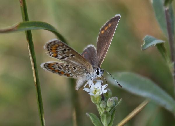 Butterfly by mishu78