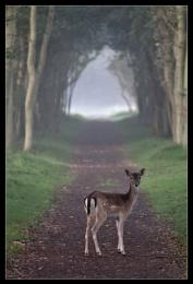 I Just walk ahead...