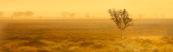 Misty Morn by cdm36