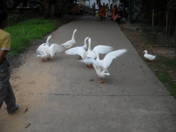 Freedom of unity. by BHUBAN